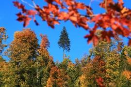 jesien3